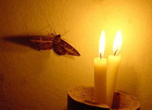 Moth Attracted by Flame